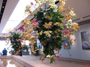 orchids in hanging planters