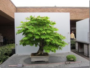two trees in planters