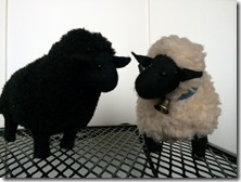 black sheep beside white ram