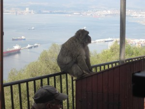Macaque sitting on railing
